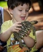 Your little animal lover and wannabe Zoo Keeper could have the most magical day of his or her life at Australian Reptile Park and Wildlife Sanctuary.